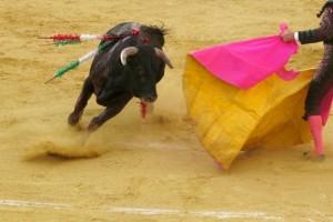 Para el alto tribunal, la corridas de toros hacen parte de la expresión artística de los ciudadanos.